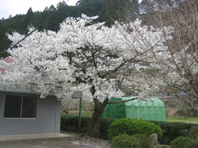 海老小の花.jpg